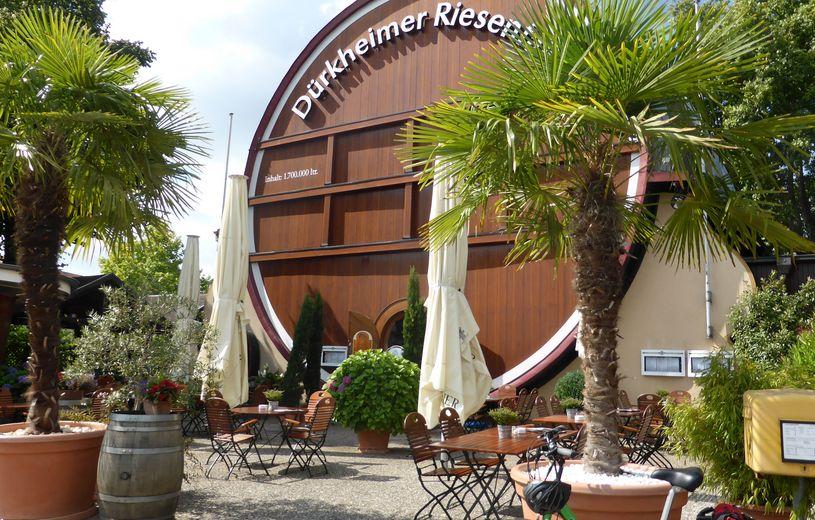 Pfalzer Weinstrasse Rhein Radweg Radreise Radurlaub Radtour Velociped